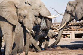 Tips to book an Affordable Botswana Safari