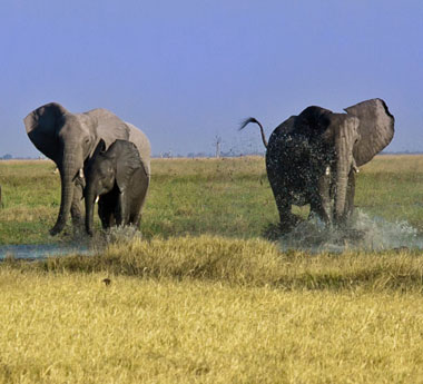 Botswana Camping Tour