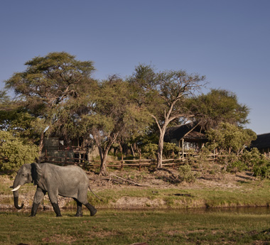 Classic Botswana Encounter